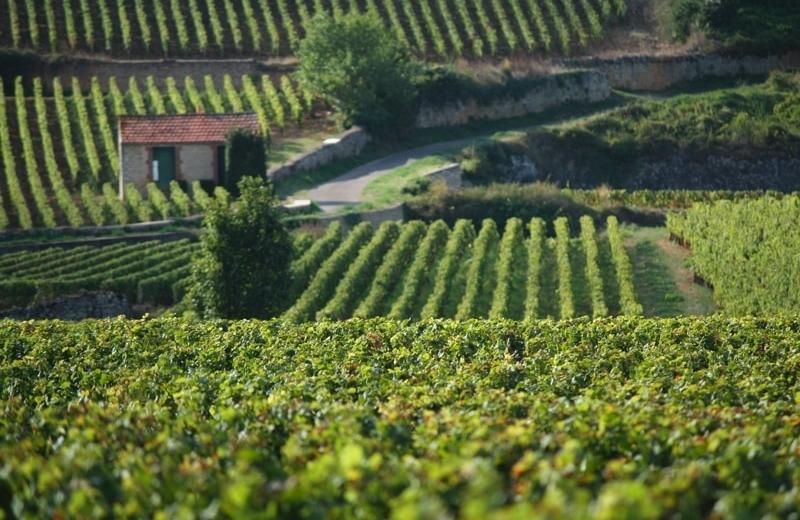 burgundy wine pronunciation audio