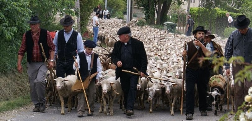 what does la transhumance mean in French