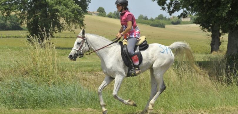 horseback riding french vocabulary2