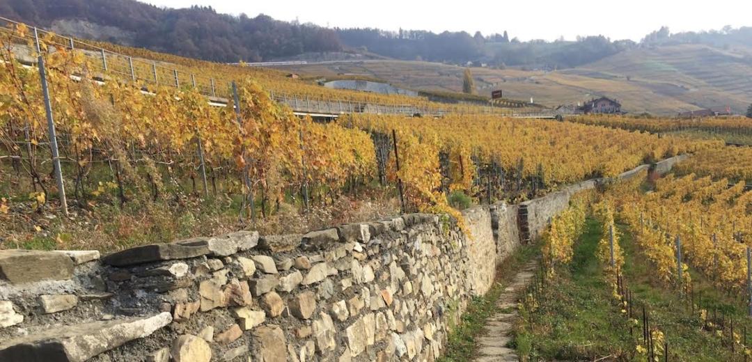 lavaux switzerland wine