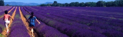immersion in provence
